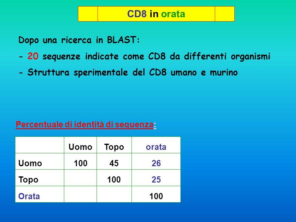 CD8 in orata Dopo una ricerca in BLAST: