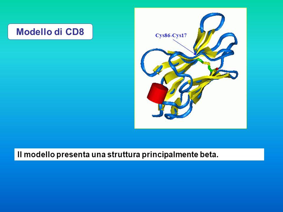 Modello di CD8 Il modello presenta una struttura principalmente beta.