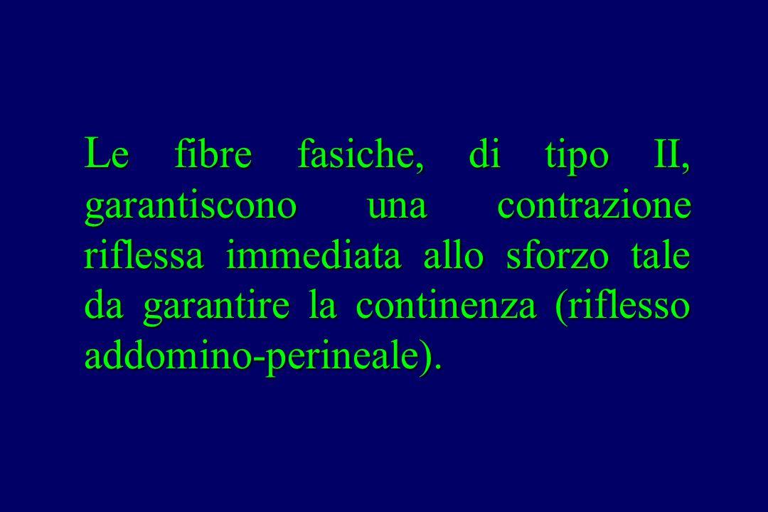 Le fibre fasiche, di tipo II, garantiscono una contrazione riflessa immediata allo sforzo tale da garantire la continenza (riflesso addomino-perineale).