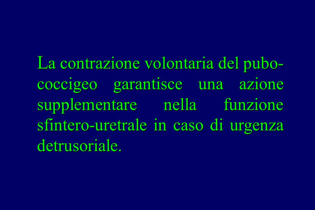 La contrazione volontaria del pubo-coccigeo garantisce una azione supplementare nella funzione sfintero-uretrale in caso di urgenza detrusoriale.