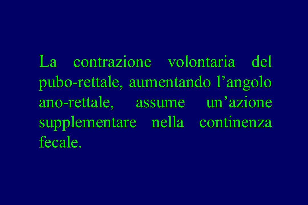 La contrazione volontaria del pubo-rettale, aumentando l'angolo ano-rettale, assume un'azione supplementare nella continenza fecale.