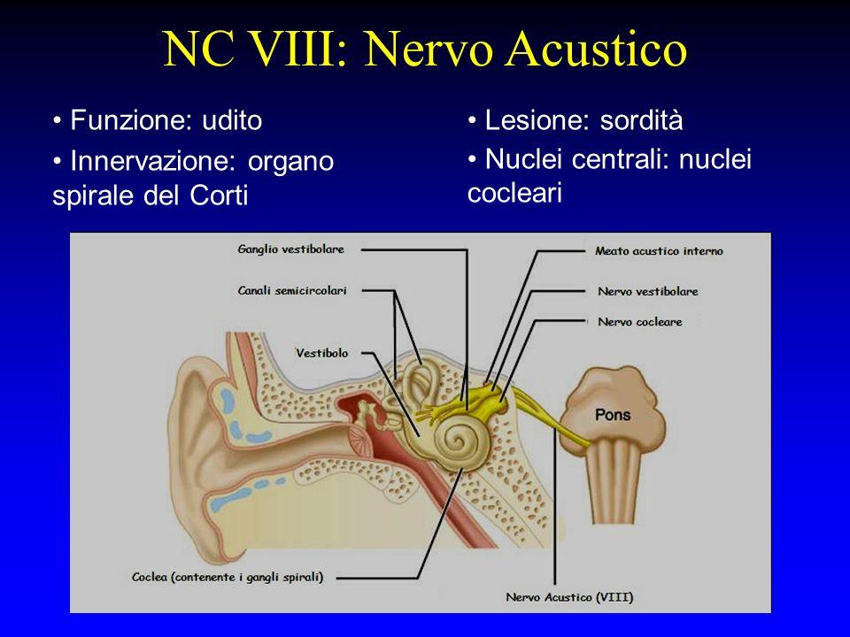 NC VIII: Nervo Acustico