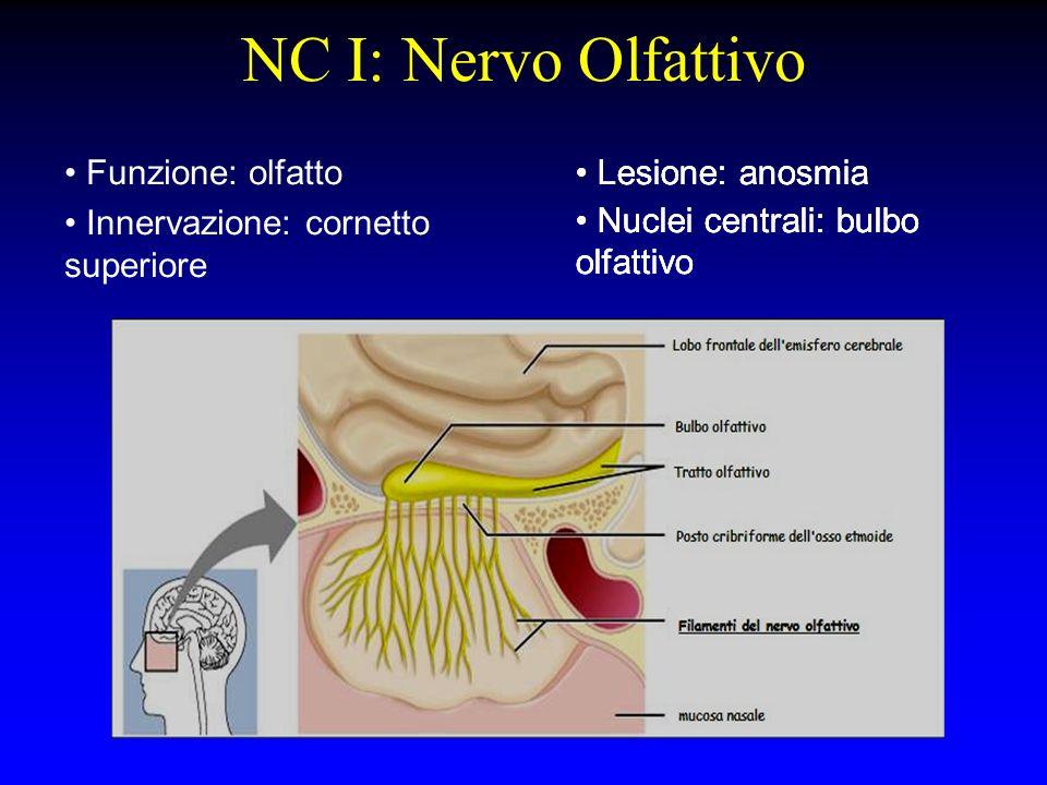 NC I: Nervo Olfattivo Funzione: olfatto