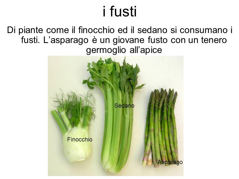 i fusti Di piante come il finocchio ed il sedano si consumano i fusti. L'asparago è un giovane fusto con un tenero germoglio all'apice.
