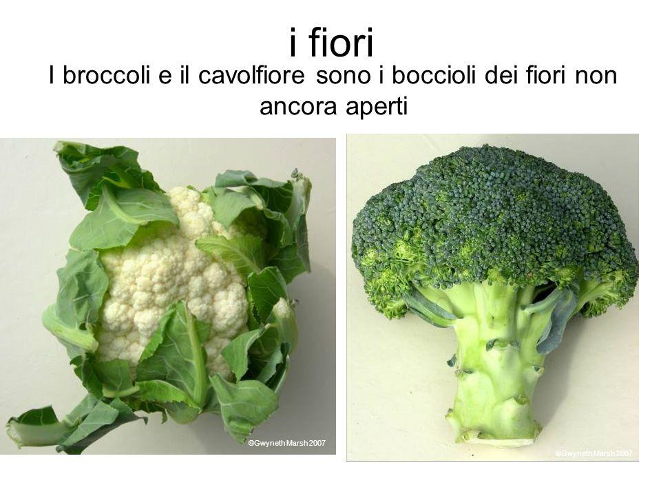I broccoli e il cavolfiore sono i boccioli dei fiori non ancora aperti