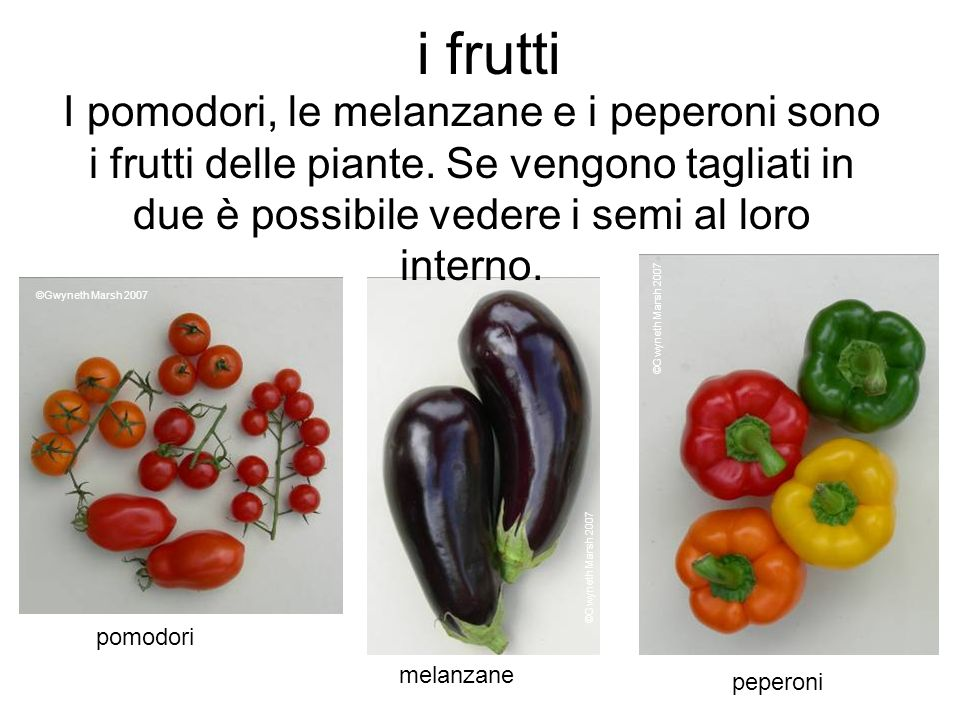 i frutti I pomodori, le melanzane e i peperoni sono i frutti delle piante. Se vengono tagliati in due è possibile vedere i semi al loro interno.