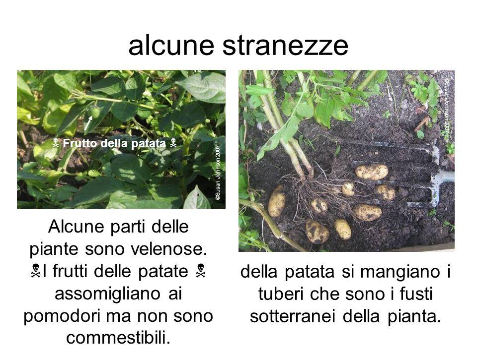 alcune stranezze Alcune parti delle piante sono velenose.