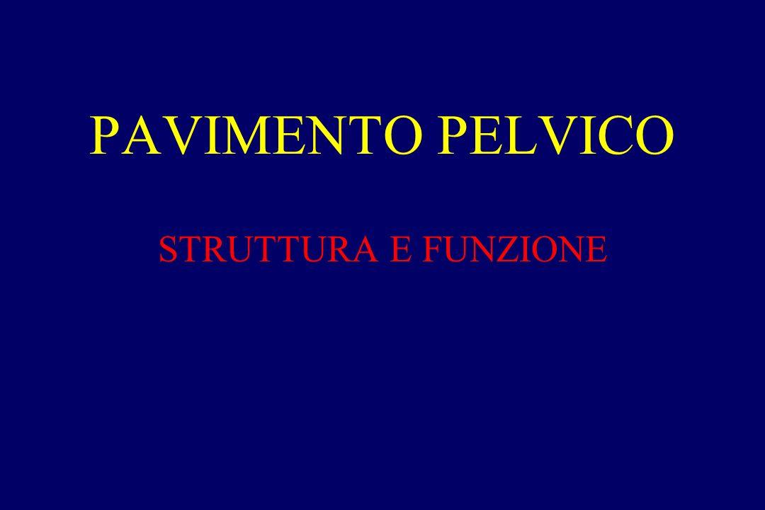 PAVIMENTO PELVICO STRUTTURA E FUNZIONE