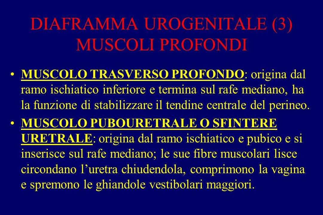 DIAFRAMMA UROGENITALE (3) MUSCOLI PROFONDI