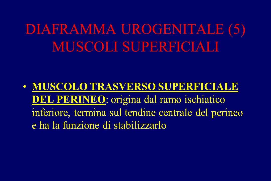 DIAFRAMMA UROGENITALE (5) MUSCOLI SUPERFICIALI