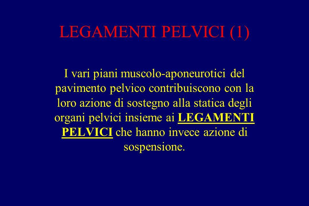 LEGAMENTI PELVICI (1)