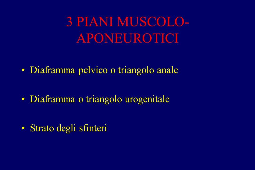 3 PIANI MUSCOLO-APONEUROTICI