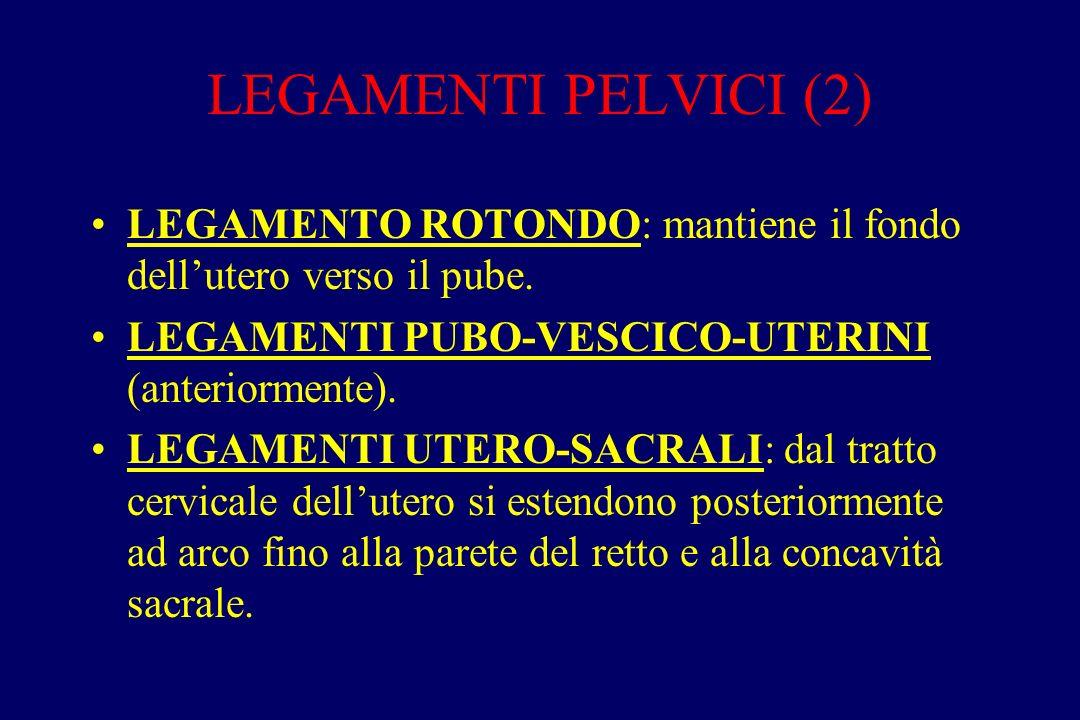 LEGAMENTI PELVICI (2) LEGAMENTO ROTONDO: mantiene il fondo dell'utero verso il pube. LEGAMENTI PUBO-VESCICO-UTERINI (anteriormente).