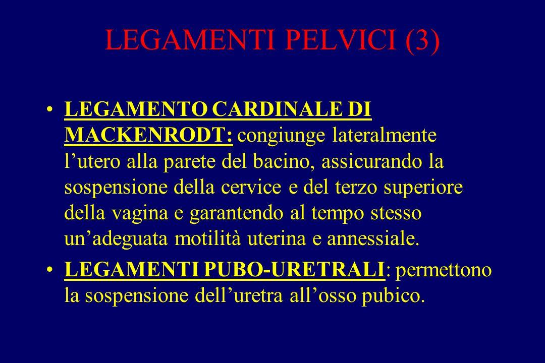 LEGAMENTI PELVICI (3)