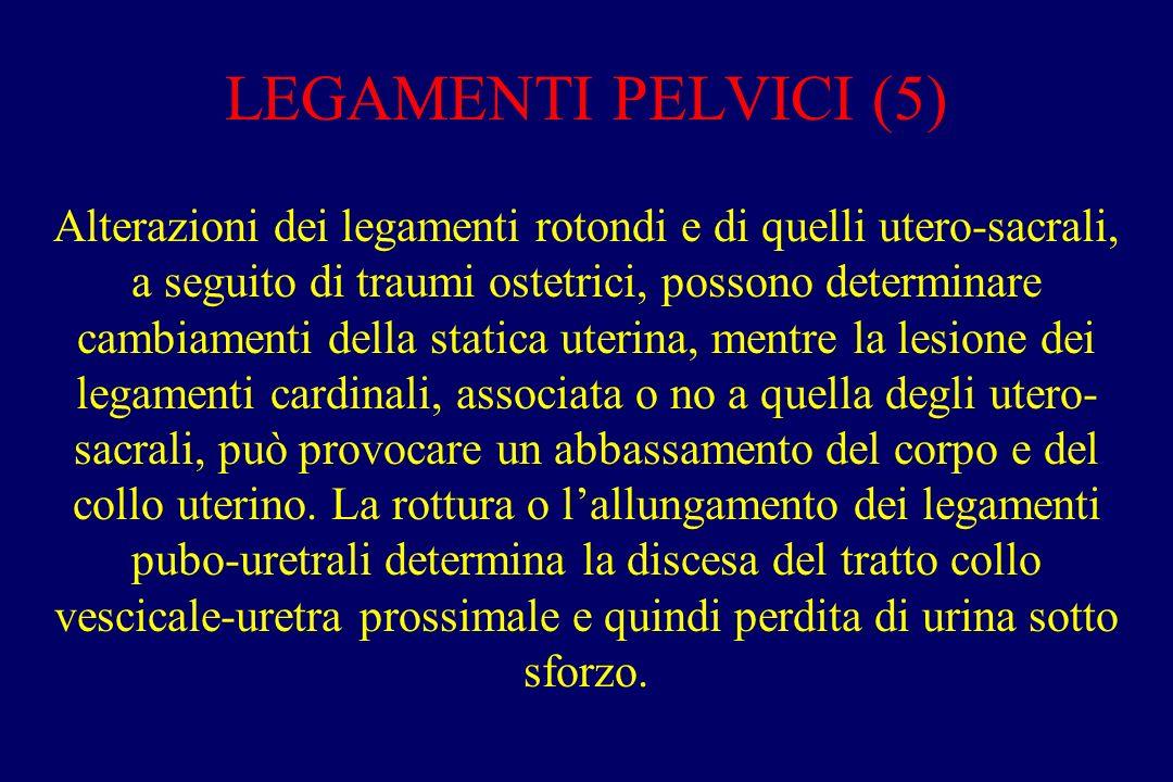 LEGAMENTI PELVICI (5)