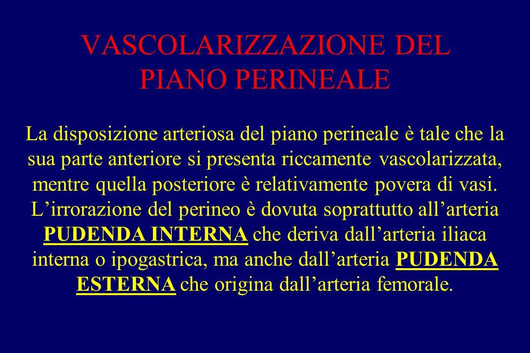 VASCOLARIZZAZIONE DEL PIANO PERINEALE