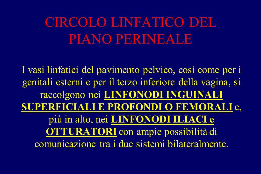 CIRCOLO LINFATICO DEL PIANO PERINEALE