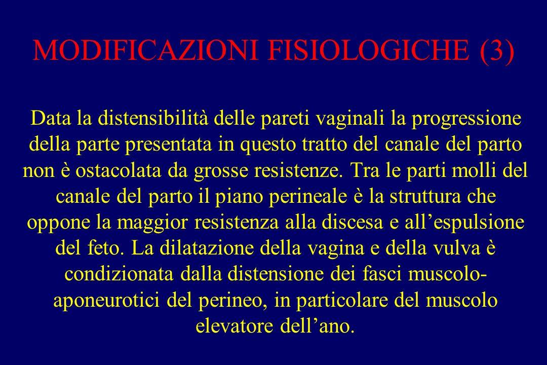 MODIFICAZIONI FISIOLOGICHE (3)