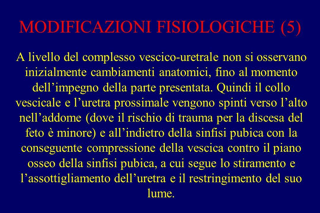 MODIFICAZIONI FISIOLOGICHE (5)