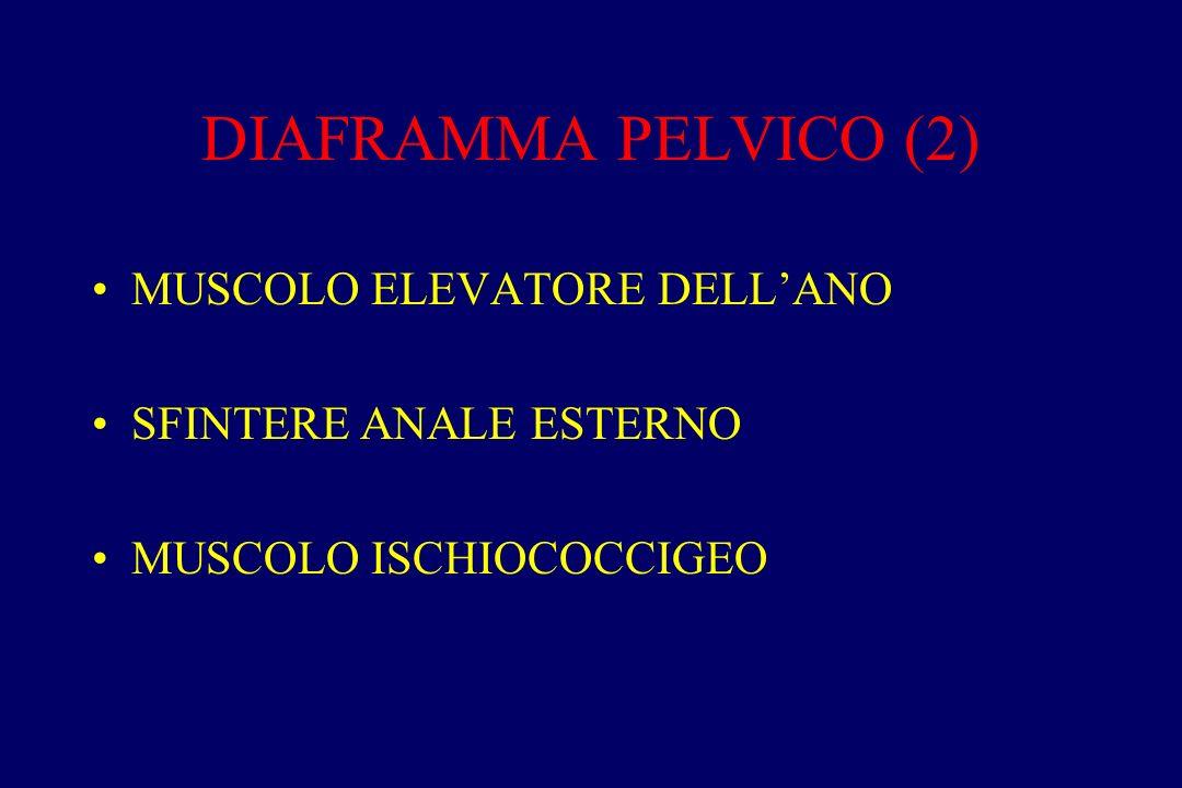 DIAFRAMMA PELVICO (2) MUSCOLO ELEVATORE DELL'ANO