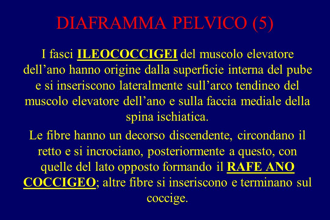 DIAFRAMMA PELVICO (5)