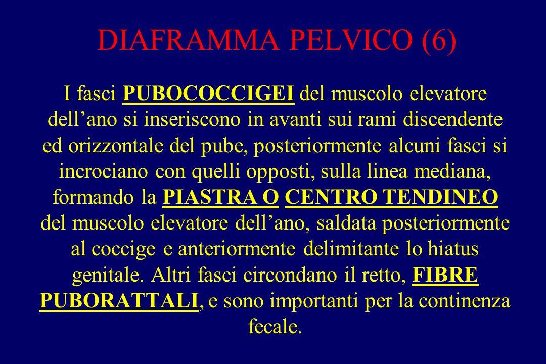 DIAFRAMMA PELVICO (6)