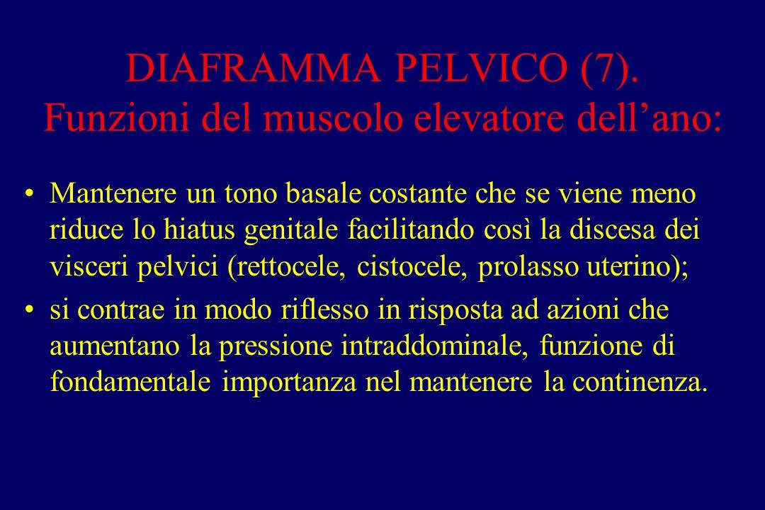 DIAFRAMMA PELVICO (7). Funzioni del muscolo elevatore dell'ano:
