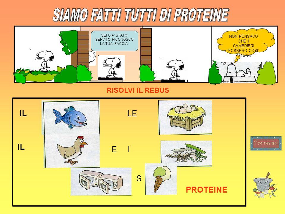 SIAMO FATTI TUTTI DI PROTEINE