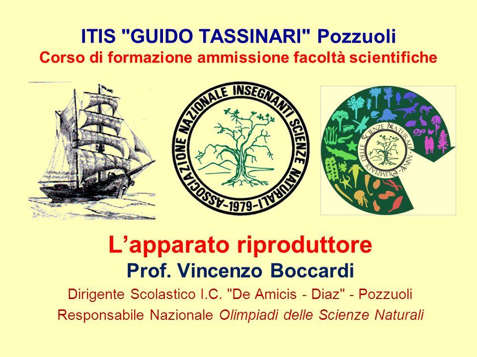 L'apparato riproduttore Prof. Vincenzo Boccardi