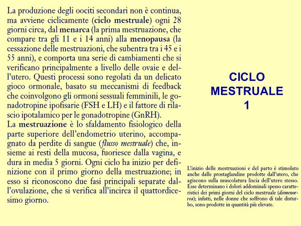 CICLO MESTRUALE 1