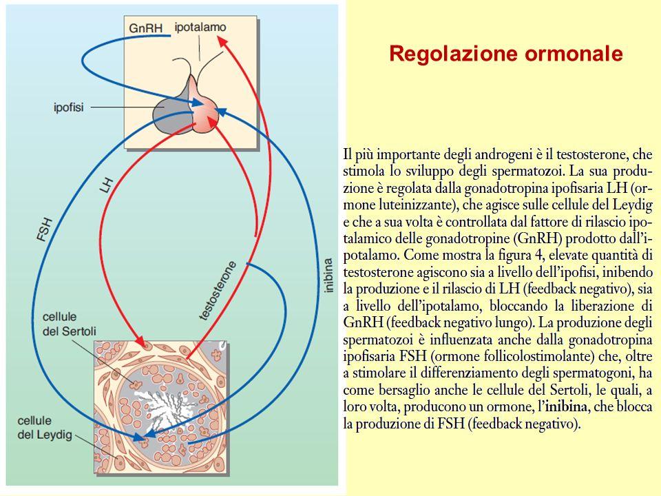 Regolazione ormonale