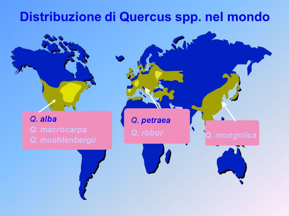 Distribuzione di Quercus spp. nel mondo