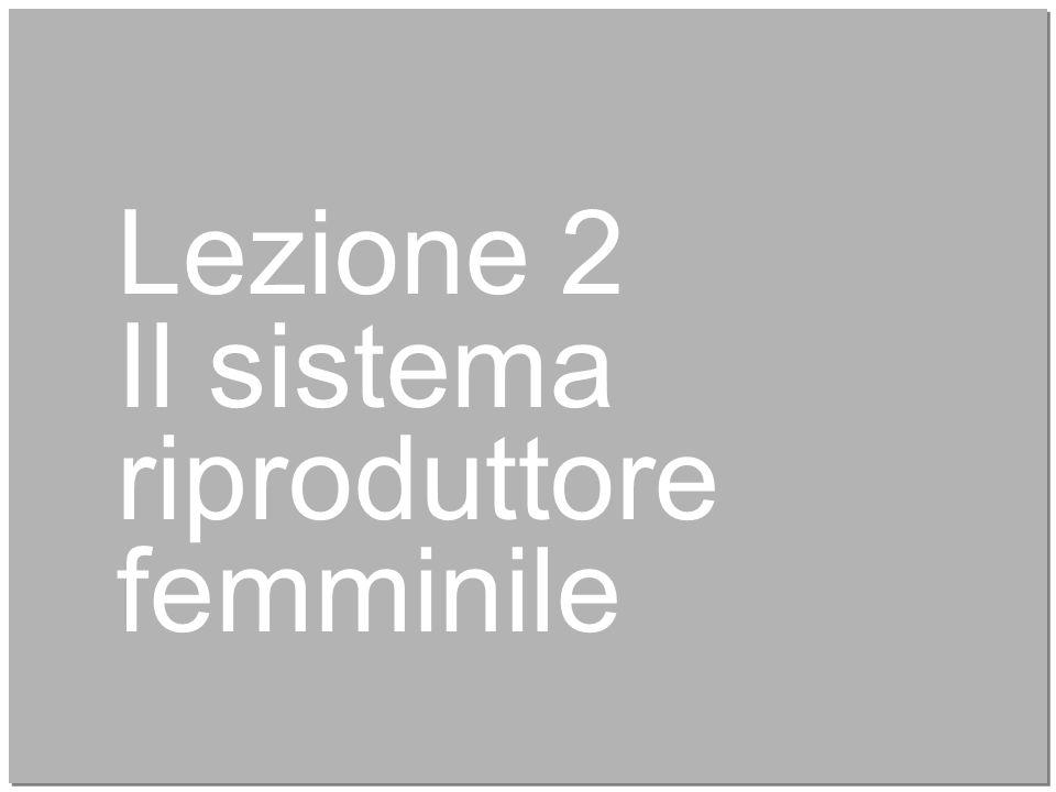 Lezione 2 Il sistema riproduttore femminile