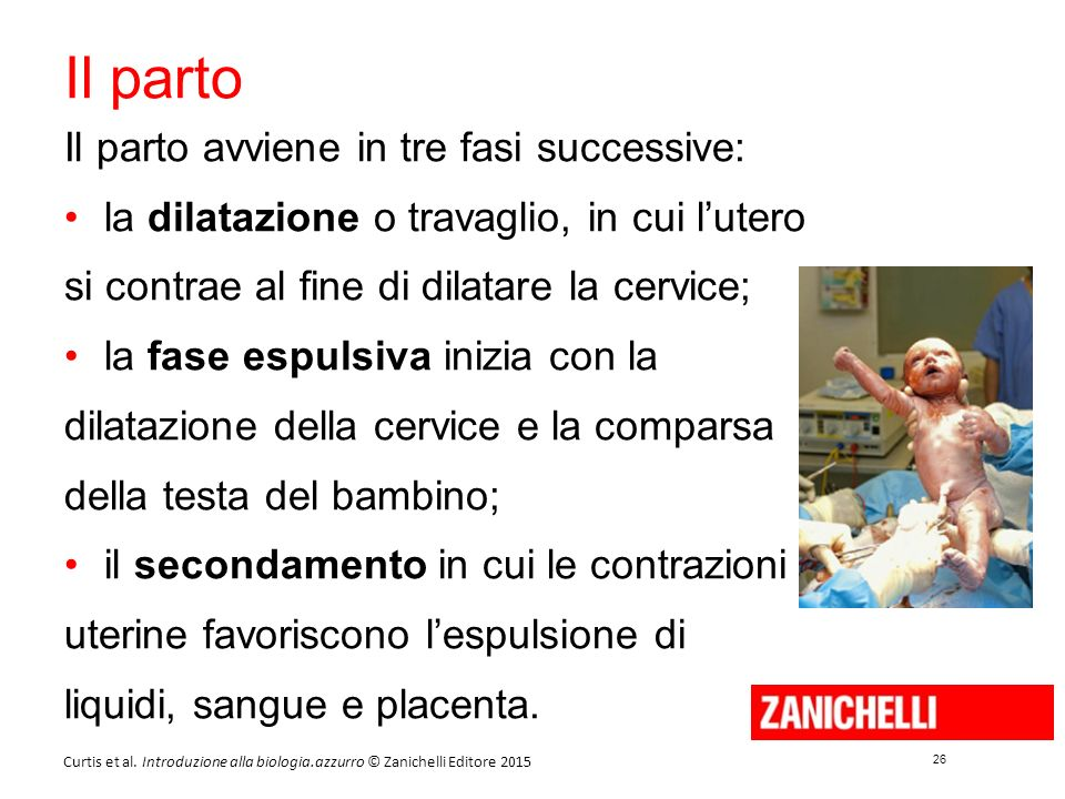 Il parto Il parto avviene in tre fasi successive: