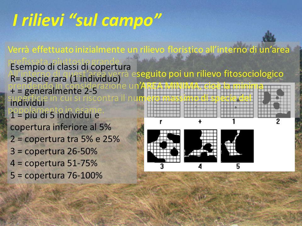 I rilievi sul campo Verrà effettuato inizialmente un rilievo floristico all'interno di un'area prefissata, piuttosto grande.