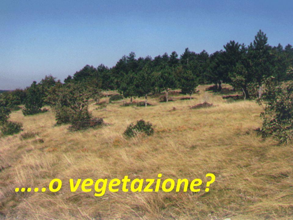 …..o vegetazione