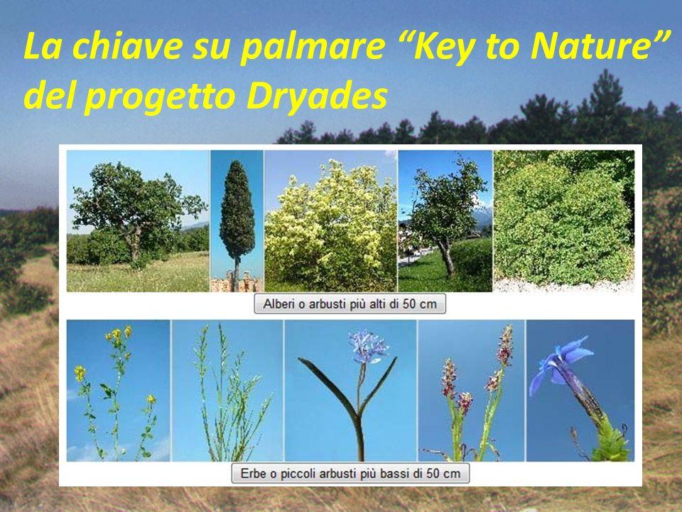 La chiave su palmare Key to Nature del progetto Dryades