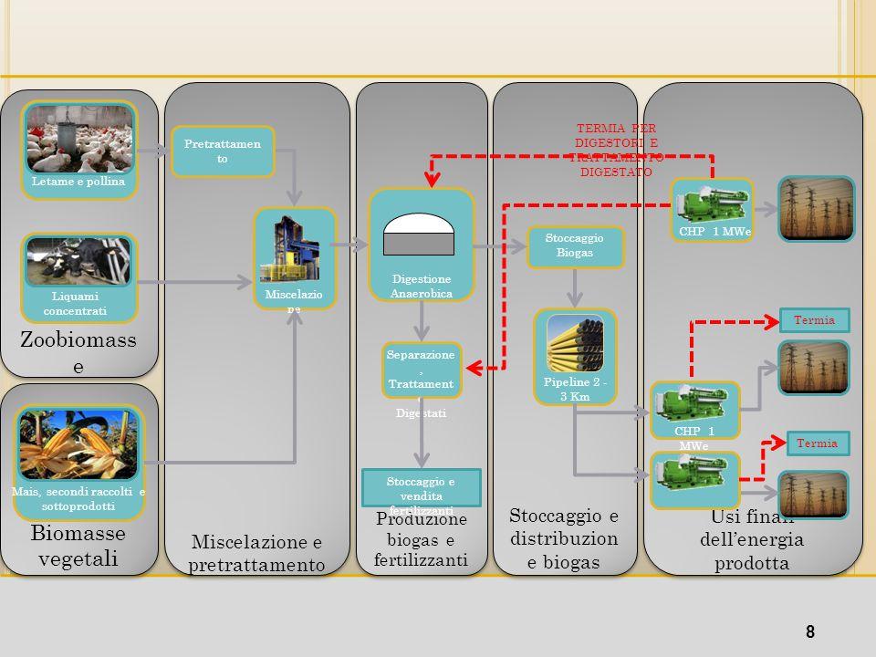 Zoobiomasse Biomasse Biomasse vegetali