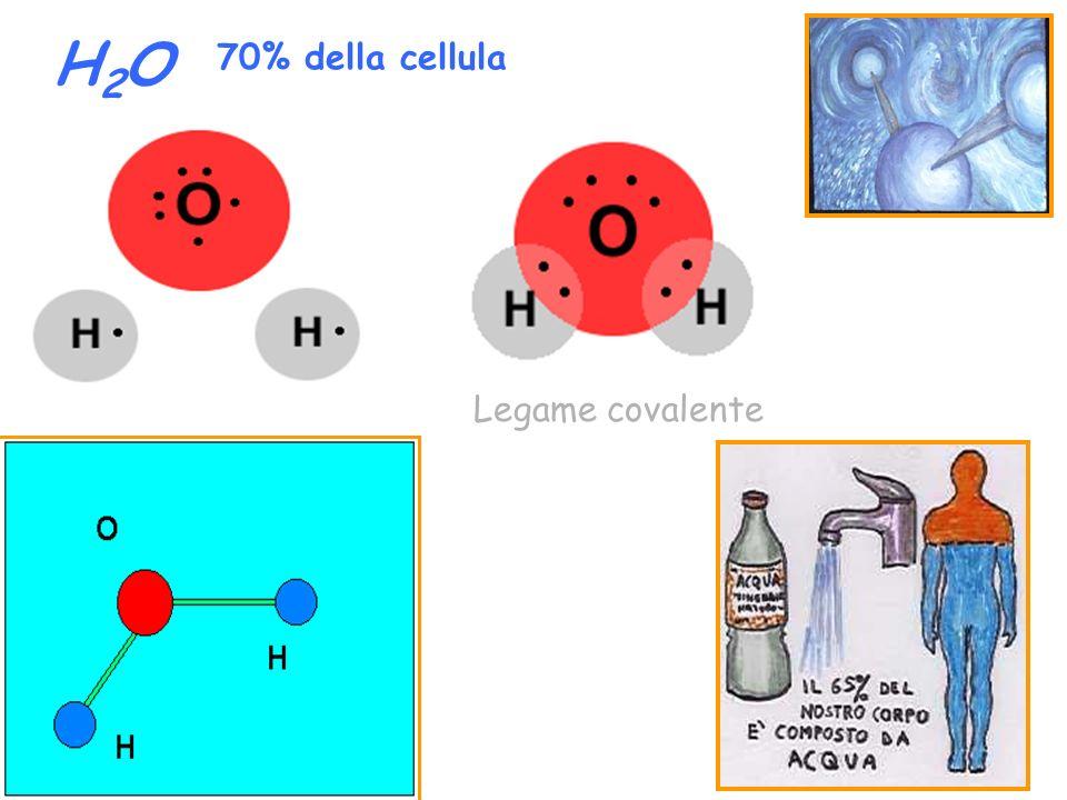 H2O 70% della cellula Legame covalente