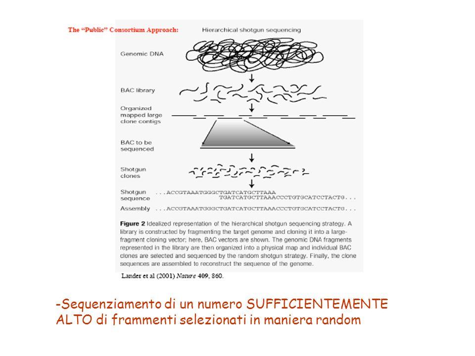 Sequenziamento di un numero SUFFICIENTEMENTE ALTO di frammenti selezionati in maniera random