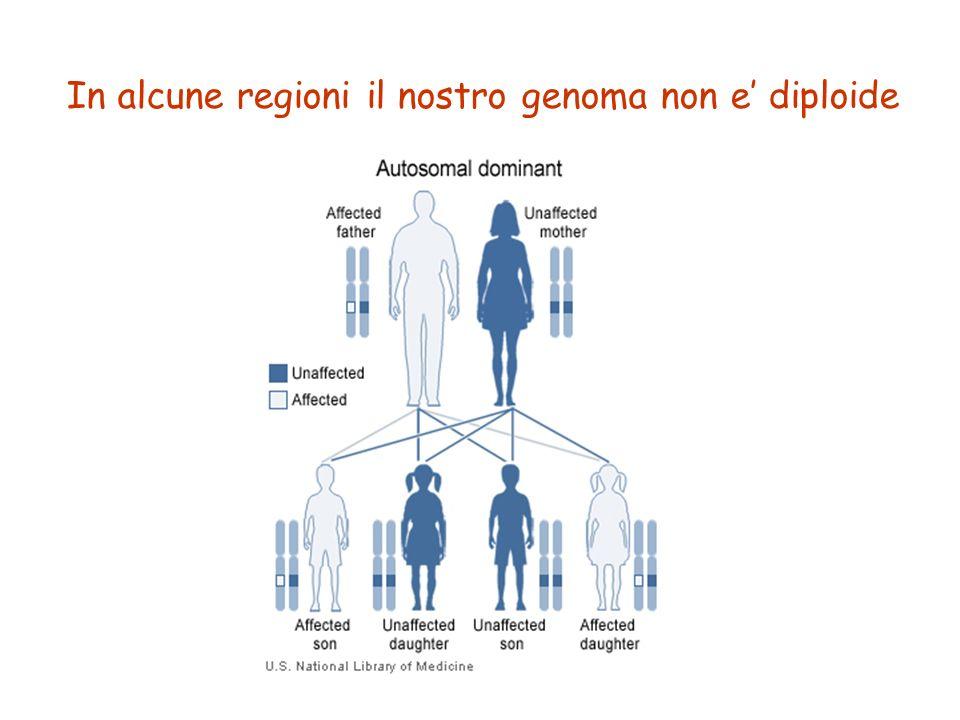 In alcune regioni il nostro genoma non e' diploide