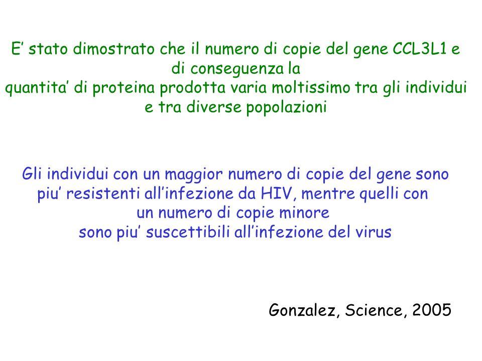 E' stato dimostrato che il numero di copie del gene CCL3L1 e