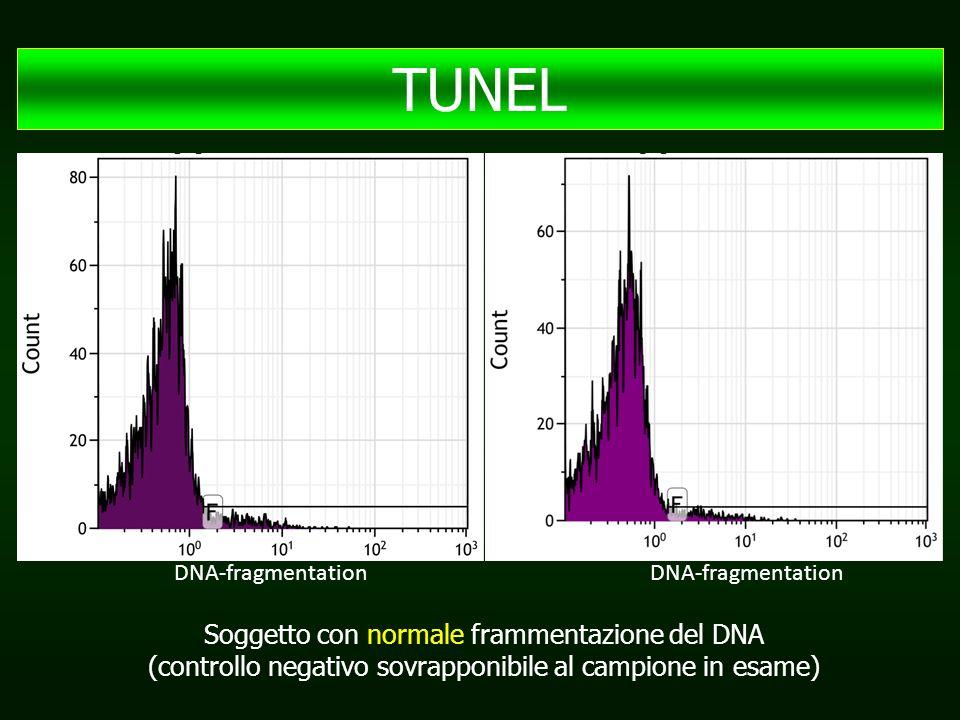 TUNEL Soggetto con normale frammentazione del DNA