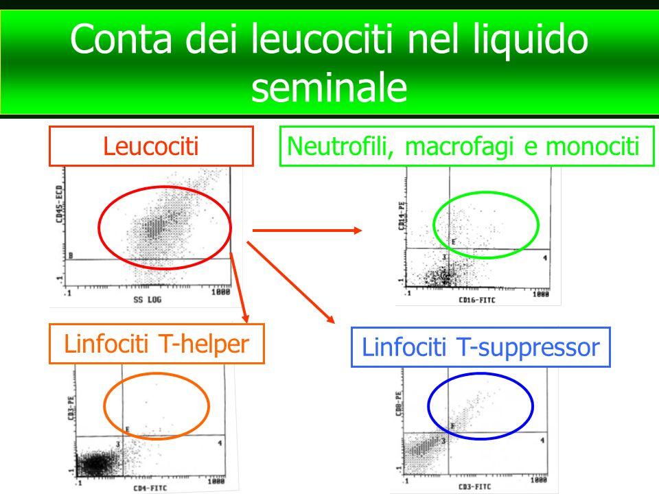 Conta dei leucociti nel liquido seminale