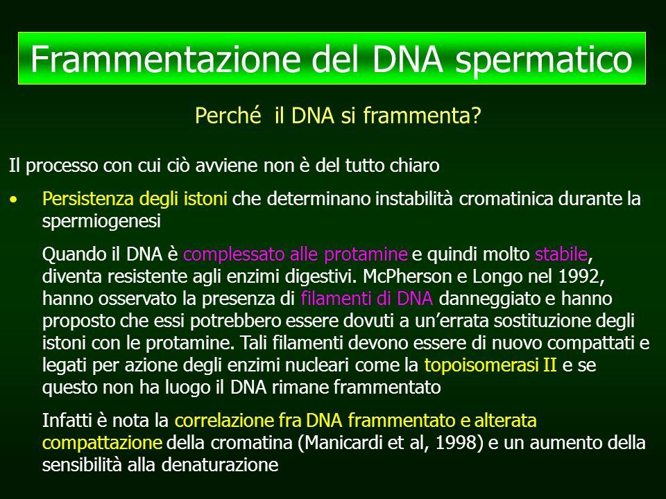 Frammentazione del DNA spermatico