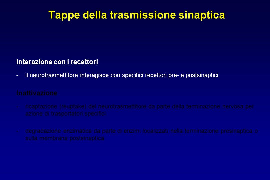 Tappe della trasmissione sinaptica