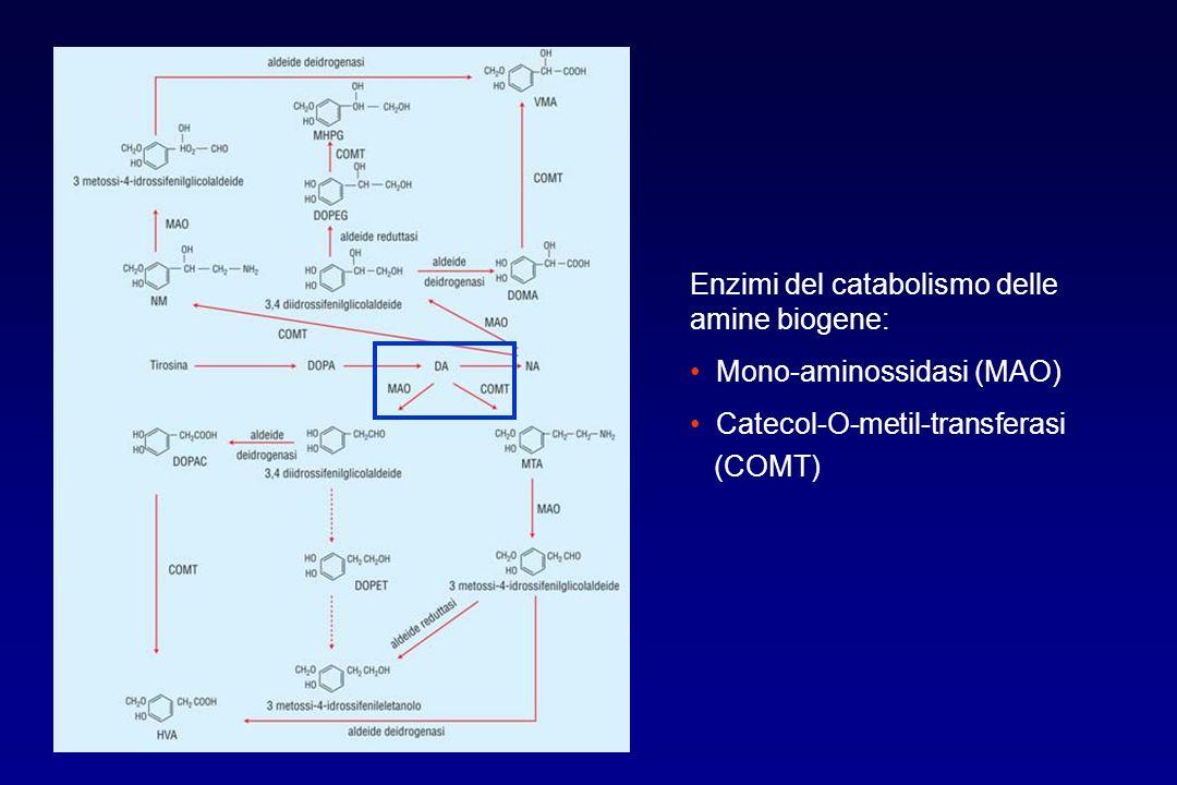 Enzimi del catabolismo delle amine biogene: