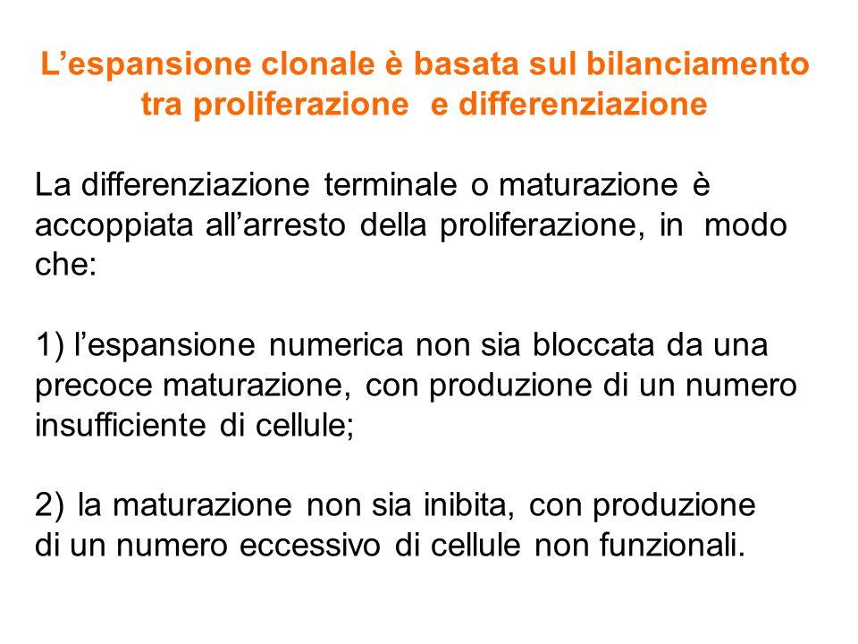2) la maturazione non sia inibita, con produzione