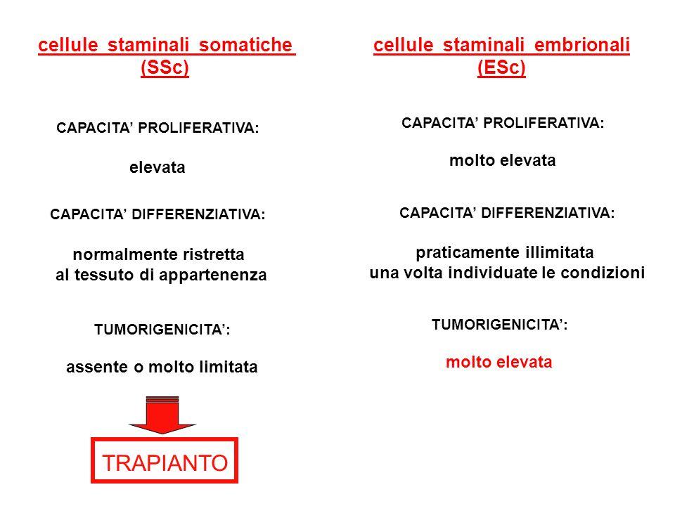 TRAPIANTO cellule staminali somatiche