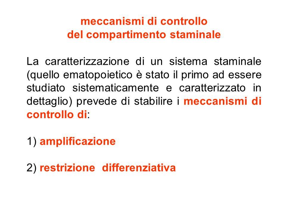 meccanismi di controllo del compartimento staminale